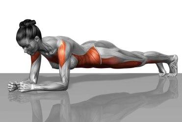 anatomia-plancha